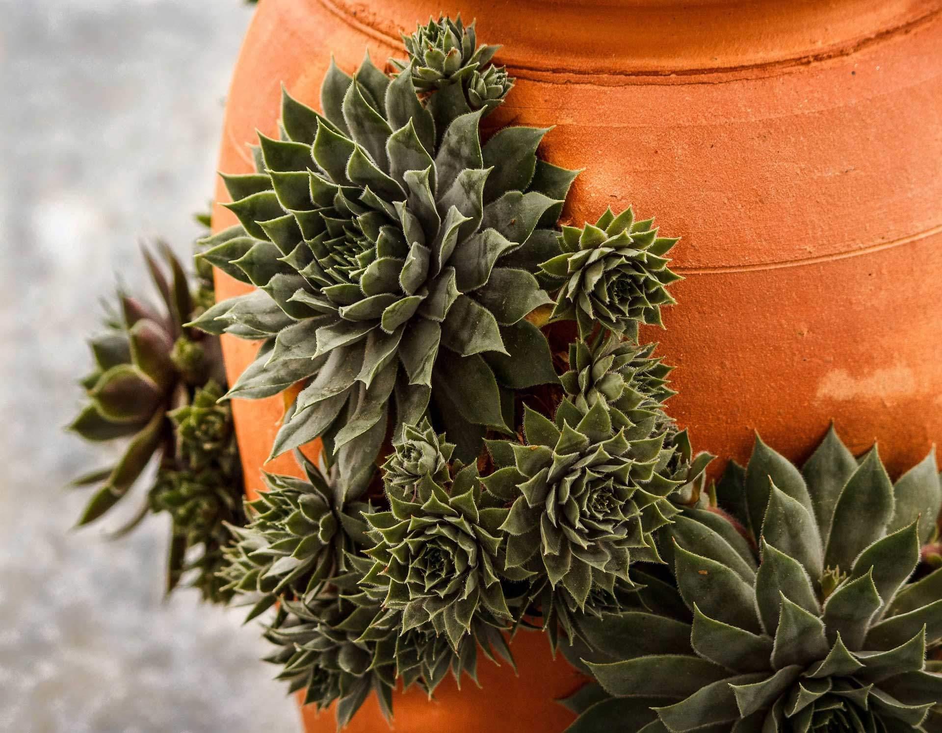 I Have A Pot, So I Will Garden