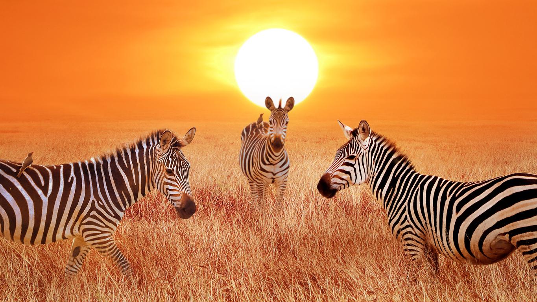travel blogger Africa