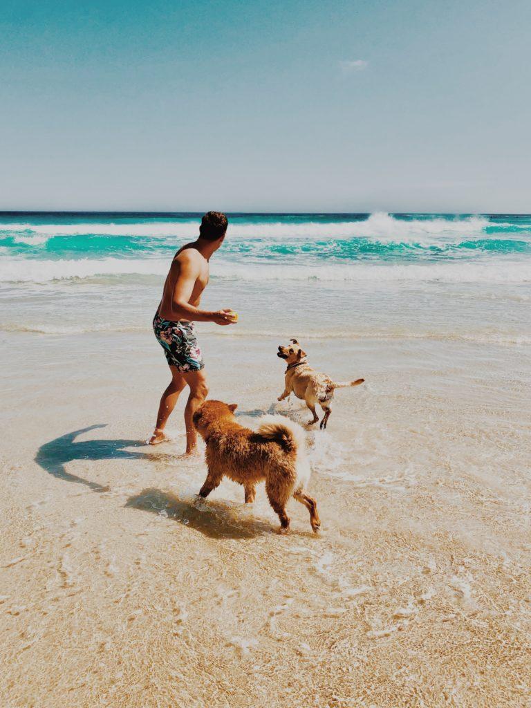 dogs mans best friend